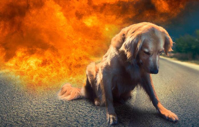 Kempten Mann Verbrennt Hund Bei Lebendigem Leib Pi News